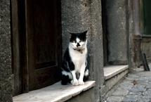 Gato; Porto, Portugal